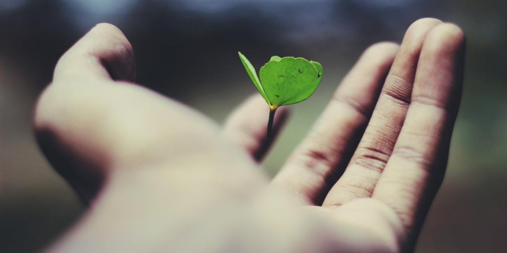 a era ecológica - instituto de desenvolvimento regenerativo