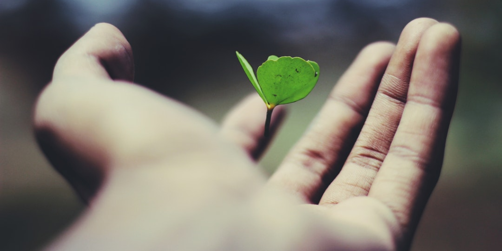 A era ecológica (parte 3)